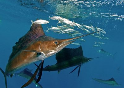 fishing-zanzibar-sail-fish