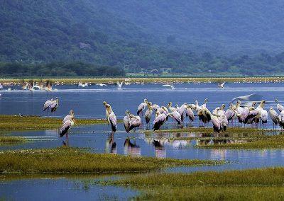 Manyara-Lake-birds