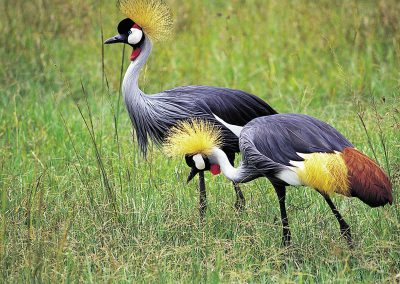 Manyara-National-Park-birds