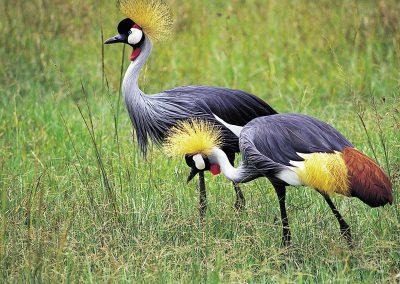 Manyara-National-Park-birds
