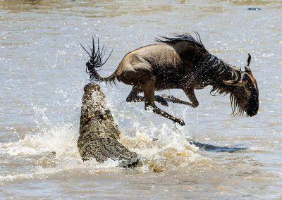 Migration-wildebeest-river-crocodile