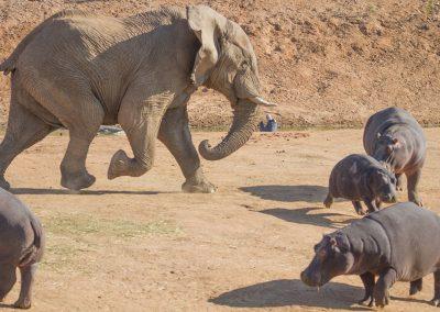 Namibia-Erindi-Private-Game-Reserve