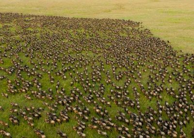The-Great-Migration-safari-serengeti-wildebeest