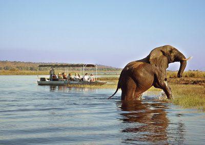 botswana-chobe-boat-cruise