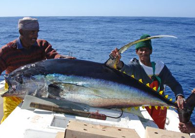 cape-fishing-yellow-fin-tuna
