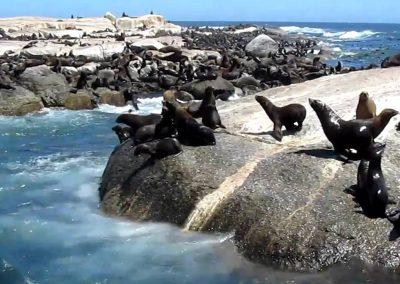 cape-seal-island
