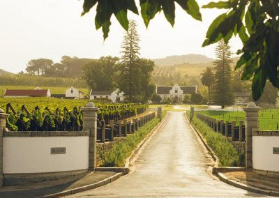 cape-wine-tasting-estate