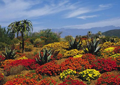 garden-route-Cape-Floral-World-Heritage
