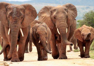 garden-route-addo-elephant-national-park