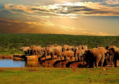 garden-route-addo-elephant-national-park-water-hole