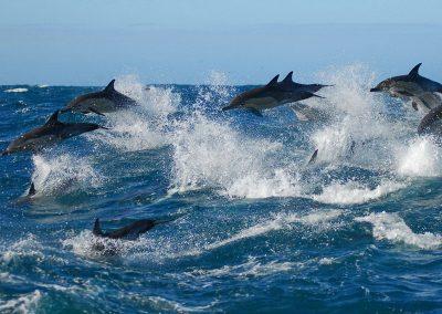 garden-route-algoa-bay-dolphins