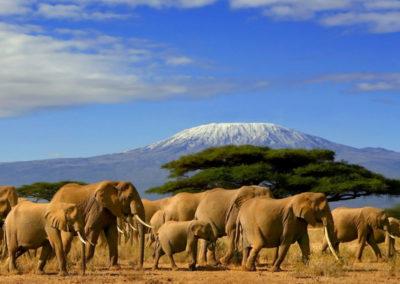 kenya-Amboseli-elephants