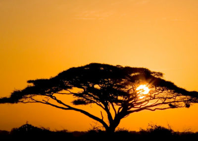 kenya-Amboseli-sunset