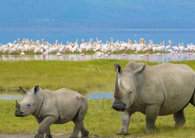kenya-Lake-Nakuru-rhino