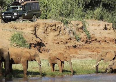 kenya-Shaba-elephant-safari