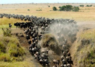 kenya-masai-mara-safari