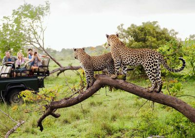 kruger-game-drive-two-leopard