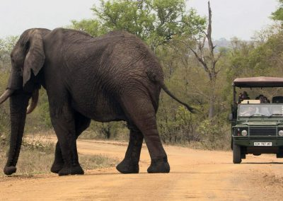 kruger-game-vehicle-elephant