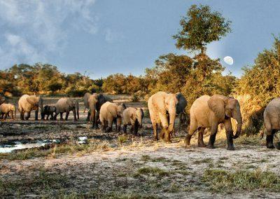 kruger-timbivati-elephants