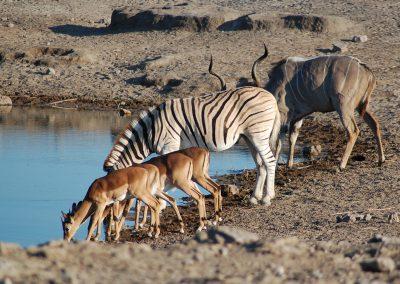 namibia-Etosha-National-Park