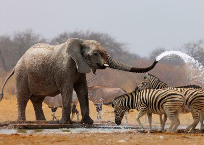 namibia-Etosha-National-Park-elpehant-zebra
