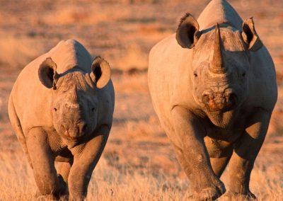 namibia-Etosha-rhino