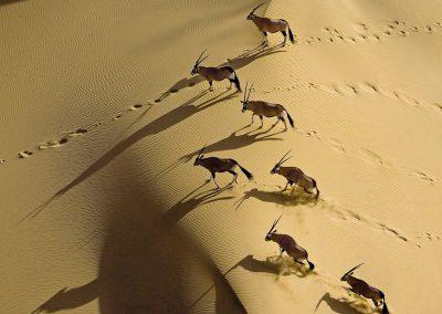 namibia-gemsbok