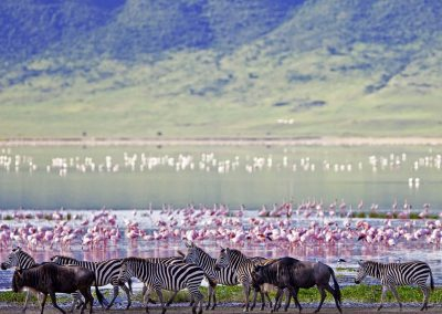 ngorongoro-crater-zebra-water-flamingo