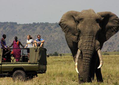 ngorongoro-elephant