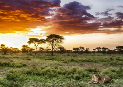 ngorongoro-plains-lion-sunset