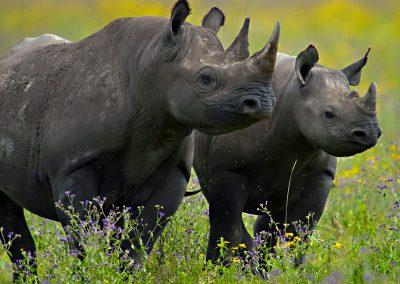 ngorongoro-plains-rhino