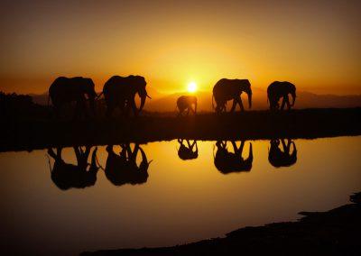 serengeti-elephant-sunrise