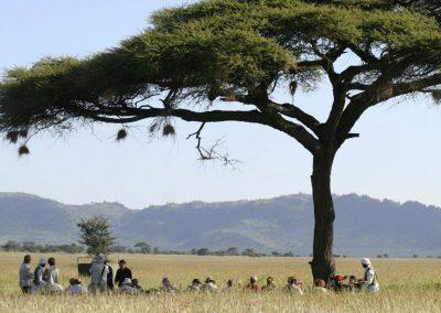 serengeti-picknic