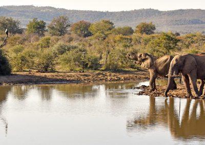 south-africa-madikwe-elephant