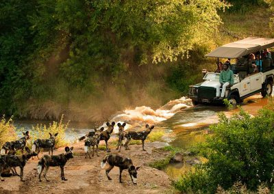 south-africa-madikwe-game-drive-wild-dog