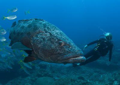 south-africa-rock-tail-beach-potato-bass