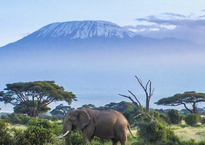 tanzania-mount-kilimanjaro-from-a-distance