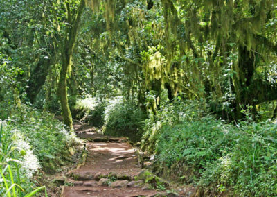 tanzania-mount-kilimanjaro-rain-forest
